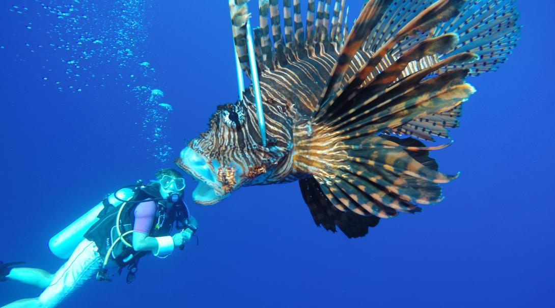A Projects Abroad volunteer playing with perspective using a lionfish on her Marine Conservation Project in Belize